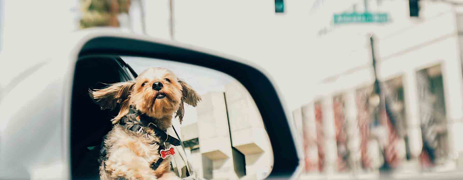 Top 8 Pet Travel Accessories To Have In Your Bmw